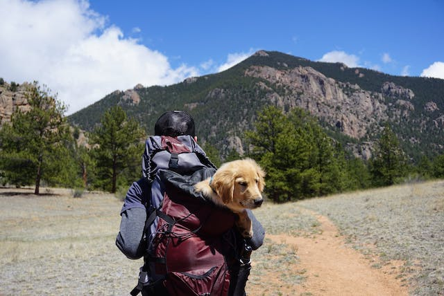 Backpack with a dog in it