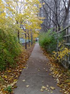 windy fall day